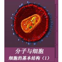 细胞的基本结构(1)