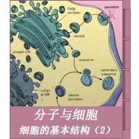 细胞的基本结构(2)