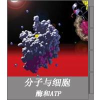 酶和ATP