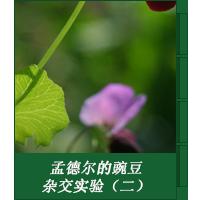 孟德尔的豌豆杂交实验(二)
