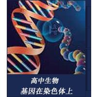 基因在染色体上