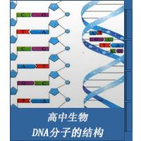 DNA分子的结构