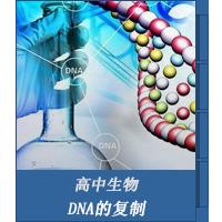 DNA的复制