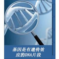 基因是有遗传效应的DNA片段